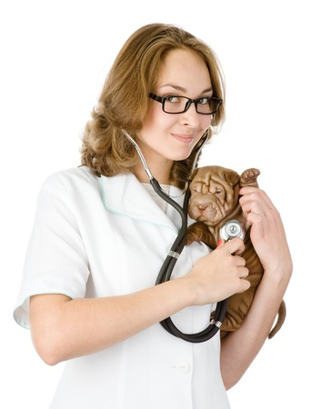 veterinarian doctor making a checkup of a sharpei puppy dog  isolated on white background photo