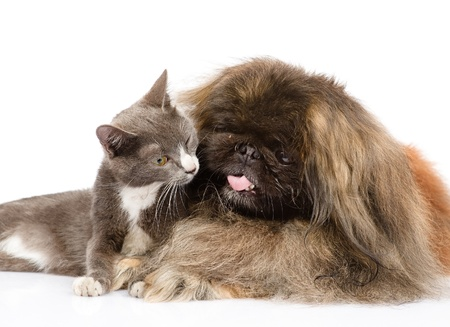 cat and dog together  isolated on white background Stock Photo - 22121144