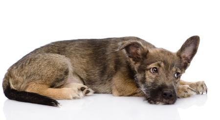 soulful eyes: sad mixed breed dog  isolated on white background Stock Photo