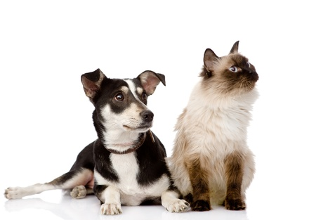 cat and puppy sitting in front  looking away  isolated on white background photo