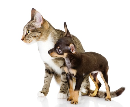 dog together with a cat look aside  isolated on white background photo