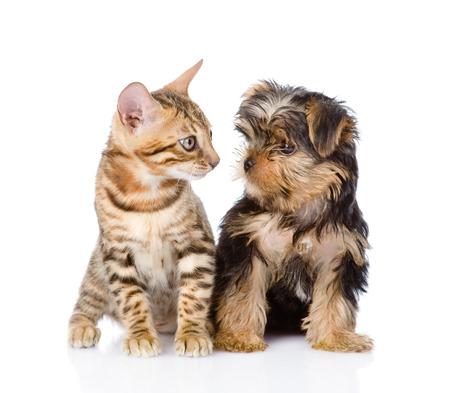 perrito: pequeño gatito y el perrito mirando el uno al otro sobre fondo blanco