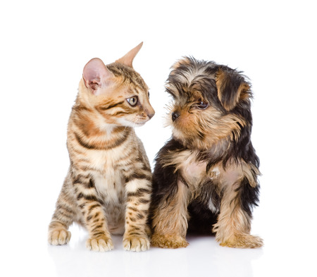 tiny little kitten and puppy looking at each other  isolated on white background