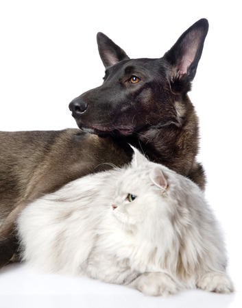 Black dog and persian cat together  isolated on white background photo