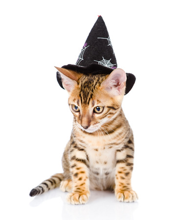 cat in costume for a masquerade  isolated on white background photo