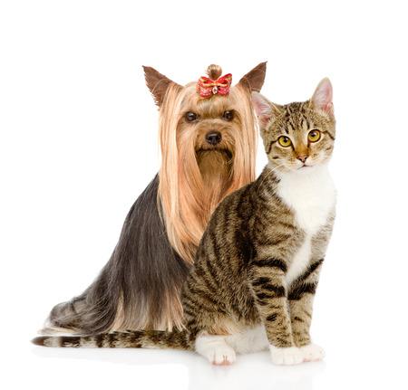 gatinho e cachorrinho em conjunto isolado no fundo branco