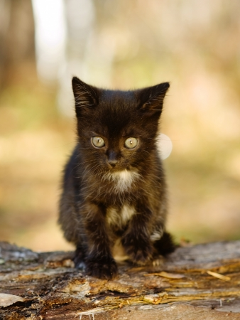 black kitty in the autumn forest photo