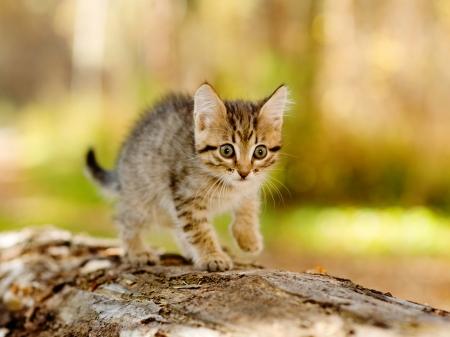 startled: little kitten hunting in forest