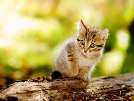startled: cute kitten outdoor in nature Stock Photo