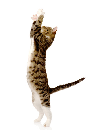 playful funny kitten isolated on white background