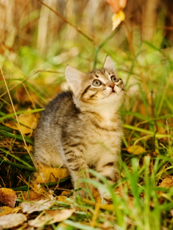 little kitty in the autumn grass looking up photo