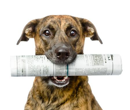 hond met krant geïsoleerd op witte achtergrond Stockfoto