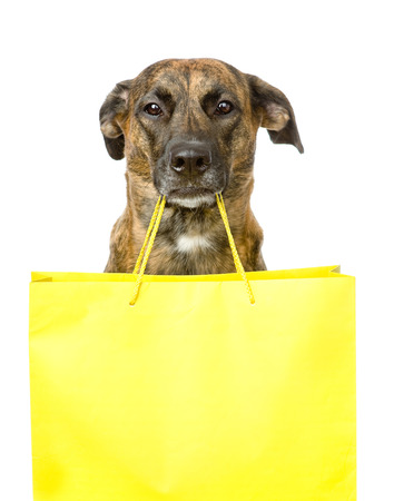 pet store: funny dog with shopping bag  isolated on white background