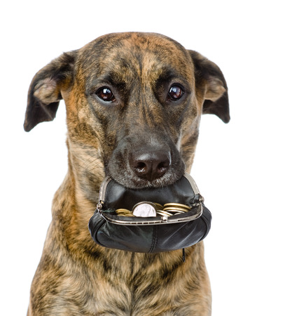 dog holding a purse with coins in its mouth  isolated on white background photo