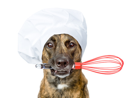 dog in chef s hat holding a wire whisk in mouth  isolated on white background photo