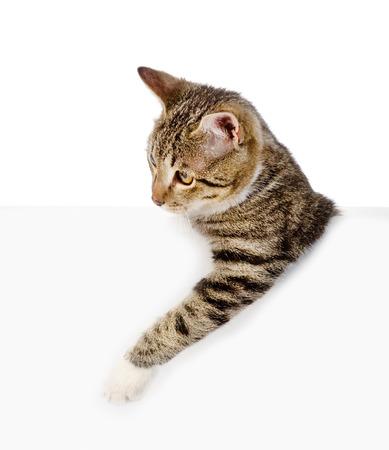 leeg bord: Schattig katje met een leeg bord geïsoleerd op witte achtergrond Stockfoto