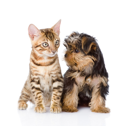 little kitten and puppy  isolated on white background photo