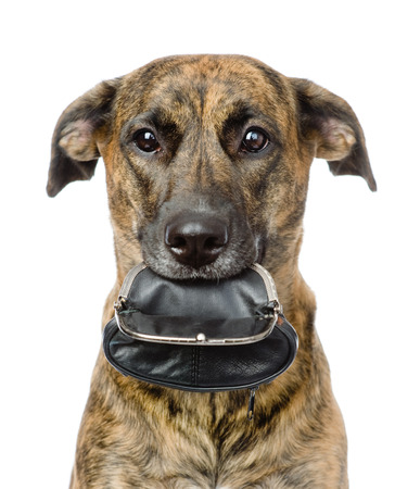 dog holding empty purse  in its mouth  isolated on white background photo