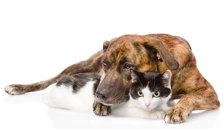 mixed breed dog hugging a cat  isolated on white background photo