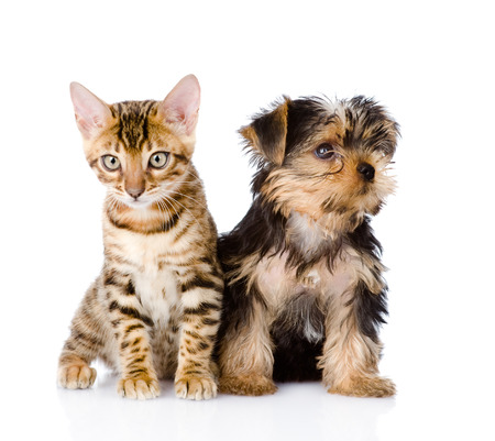 little kitten and puppy together  isolated on white background photo