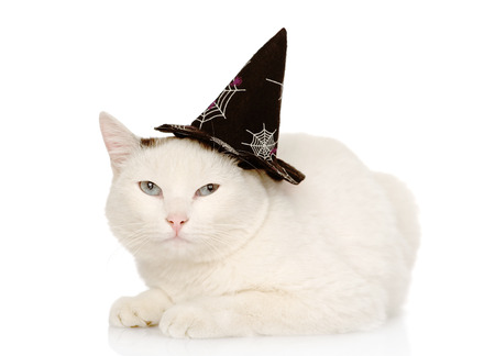 Cat with witch hat for halloween  isolated on white background photo