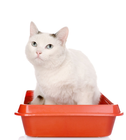 kitten in red plastic litter cat  isolated on white background photo