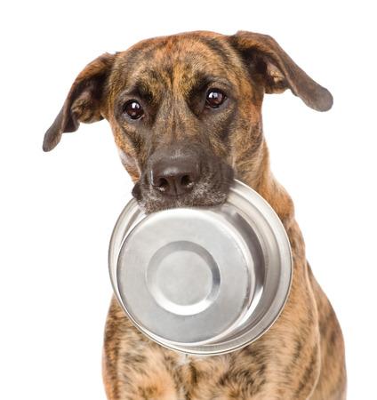 aliments droles: chien tenant un bol dans la bouche isolé sur fond blanc