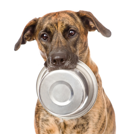 or hungry: dog  holding bowl in mouth  isolated on white background