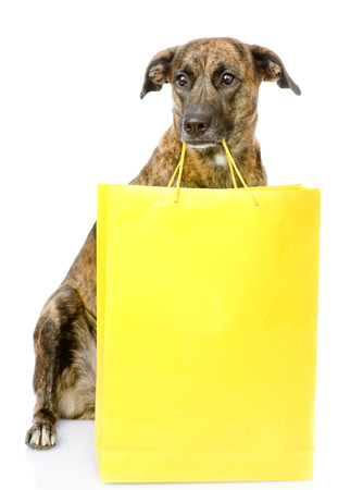 funny dog with shopping bag  isolated on white background photo
