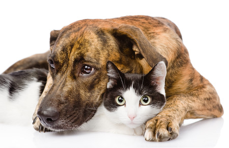 animals together: Sad dog and cat together  isolated on white background