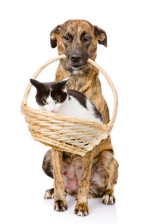 dog holding in its mouth basket with a cat  isolated on white background