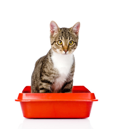 kitten in red plastic litter cat  isolated on white background