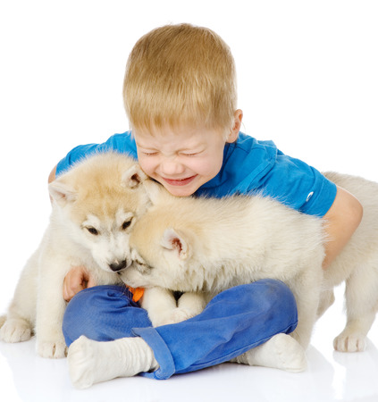 little boy embraces two   1085;uskies puppies  isolated on white background photo