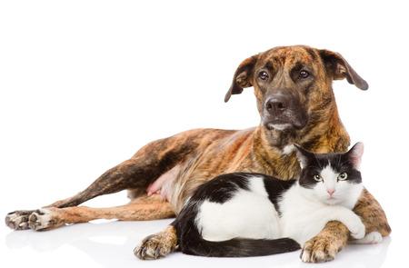 gaze: Large dog and cat lying together  isolated on white background