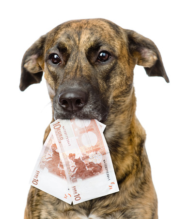 dog holding euro in its mouth  isolated on white background