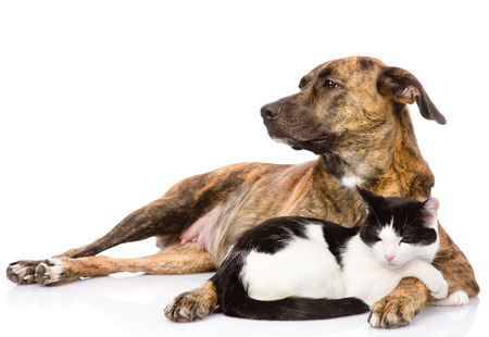 Large dog and cat lying together  isolated on white
