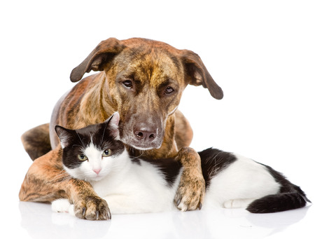 mixed breed dog and cat lying together  isolated on white background Stock Photo