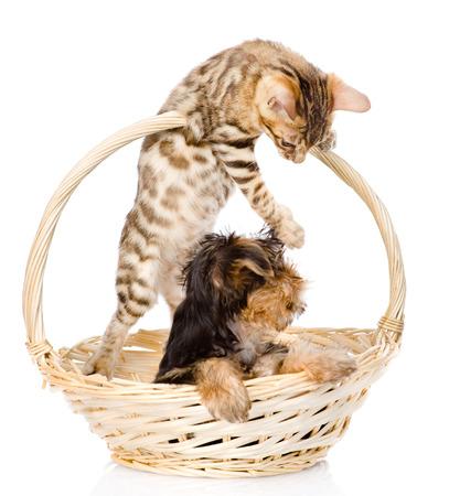 chaton jouant avec un chiot isol� sur blanc photo