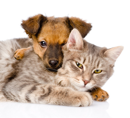dog cat: mixed breed dog hugging cat  isolated on white  Stock Photo