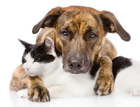 love couple: mixed breed dog and cat lying together  isolated on white background Stock Photo