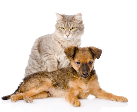 puppy and cat  isolated on white background photo