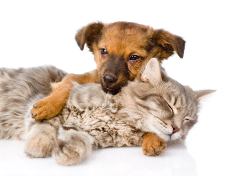 Dog and cat sleeping  isolated on white background photo