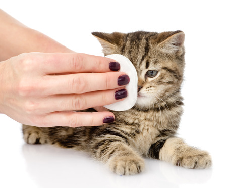 whelp: veterinary surgeon wipes eyes to a cat  isolated on white background