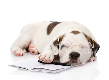 sleeping puppy with pen and notebook  isolated on white background photo