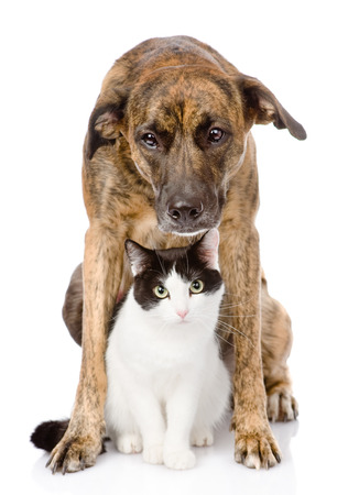 gaze: Dog and cat sitting in front  isolated on white background