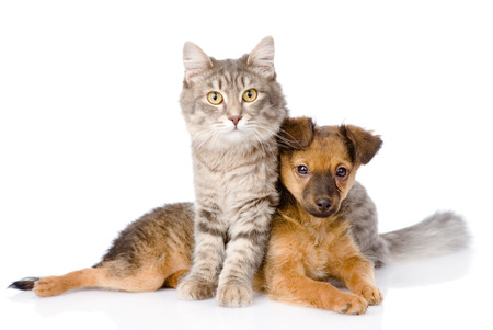 cat and dog looking at camera  isolated on white background