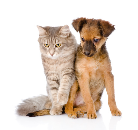 puppy and kitten sitting together  isolated on white background photo
