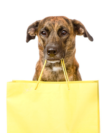 funny dog with shopping bag  isolated on white photo