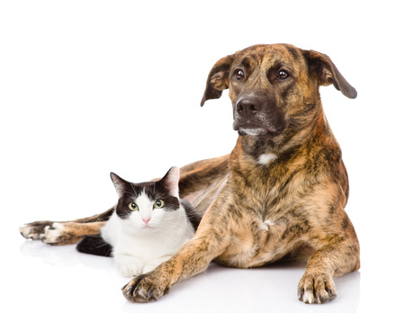 big dog: mixed breed dog and cat together
