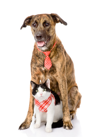 dog and cat together  looking at camera  isolated on white background photo